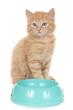 Kätzchen sitzt am Futternapf