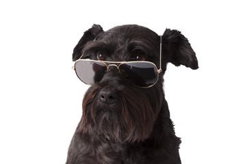 perro negro con gafas de sol