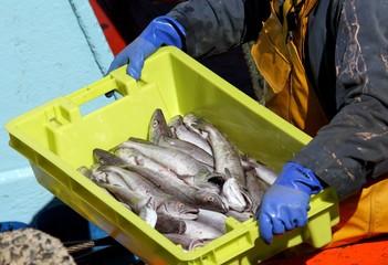 arrivage de poisson au port de pêche