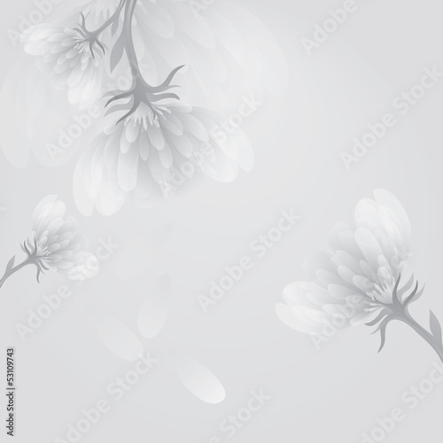 Flower peony / Soft white-and-black background