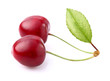 Two ripe cherry with leaf