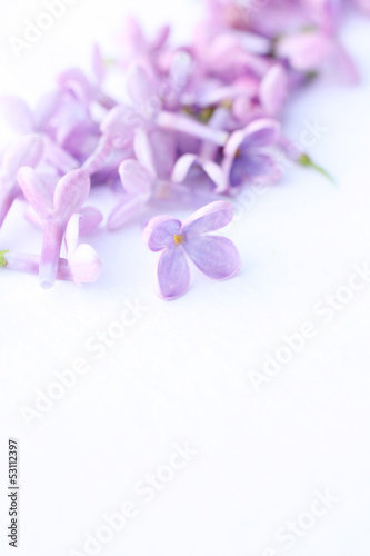 Foto op Canvas Lilac Pretty lilac macro on white
