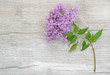 lilac branch on wooden background