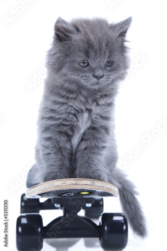 Poster kitten playing isolated on white background