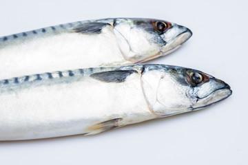 Two mackerel isolated on white
