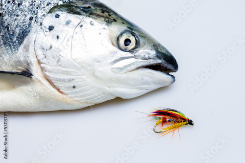 Caught salmon with fly