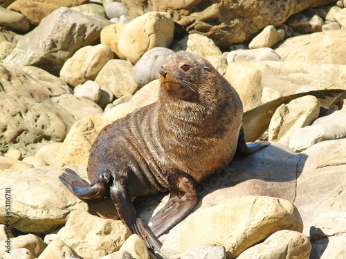 Seals on the New Zealand coast