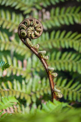 detail of fern frond