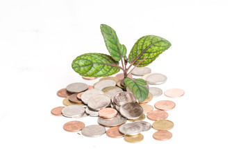 Young plant and coins isolated over white, Business growth