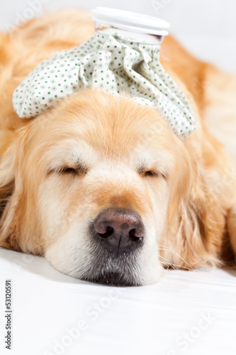 Dog with flu