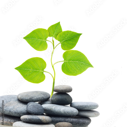 Plant tree in stones isolated on white background.