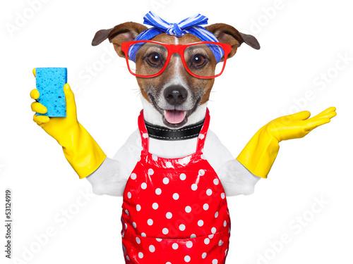 housewife dog