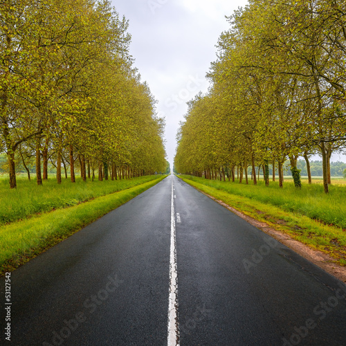 Straight empty wet road between trees. Loire valley. France.