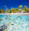 Tropical island - 53128524