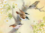 Birds on a blossoming apple tree