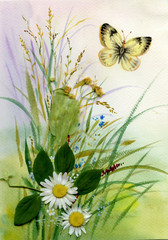 Wild flowers and a butterfly