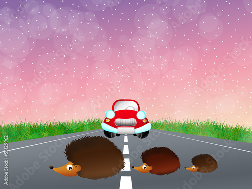 Hedgehogs family on the road