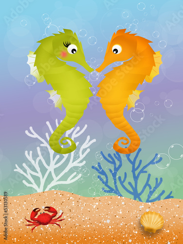 seahorses in love