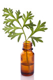 wormwood herb essence in a bottle