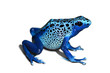 Poison frog - 53131311
