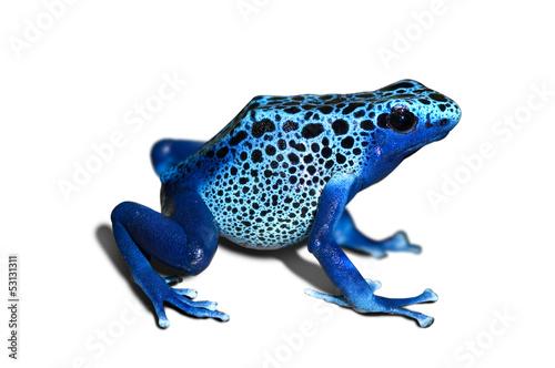 Foto op Plexiglas Kikker Poison frog
