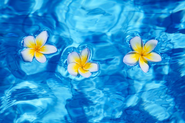 Flower in blue water
