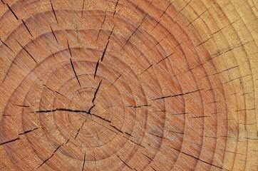 Tronco di un albero