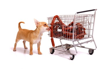 Welpe mit Einkaufswagen