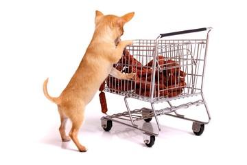 Welpe beim Einkaufen