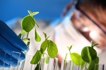 Scientist examining samples with plants
