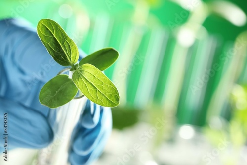 Closeup of plant in scientist hand