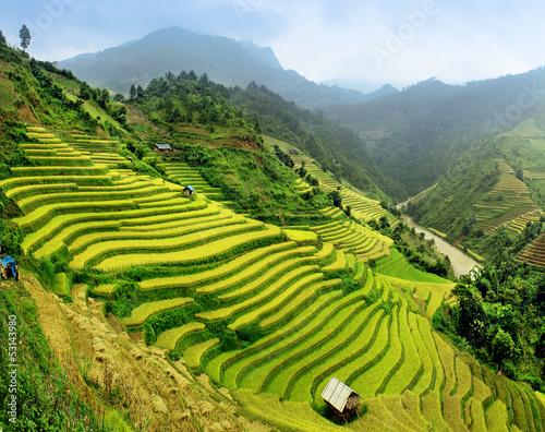 Naklejka Rice fields Mu Cang Chai, Vietnam