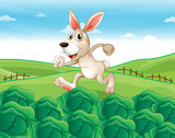 A bunny running at the farm