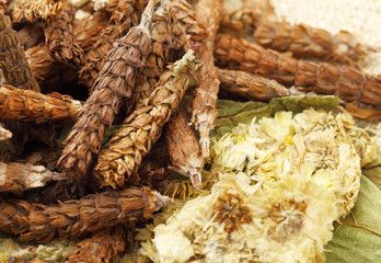 Chinese herbal medicine close up