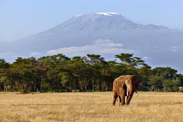 Elefant & Kilimandjaro