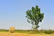 ballot de paille près d'un arbre