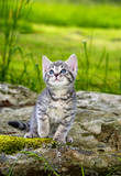 a cute little kitten in the garden grass - 53149149