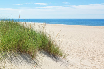 Dunes on a sunny beach near the beach. Summer.