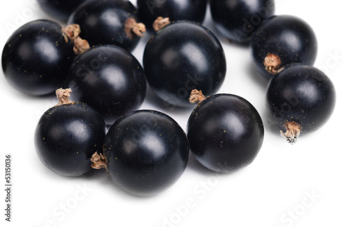 fresh  currant  closeup isolated on a white background.