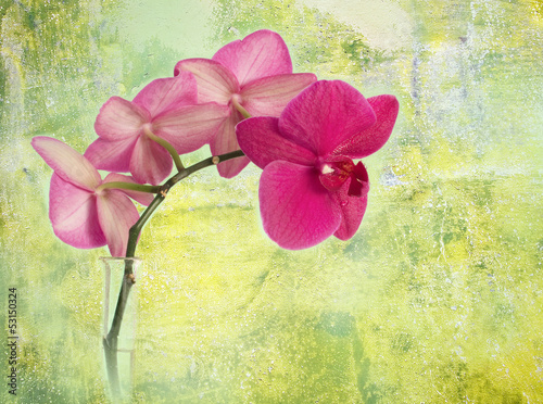 pink orchid branch against green corroded background
