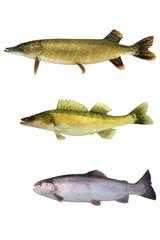 Fische 144
