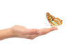 Woman hand holding a beautiful butterfly