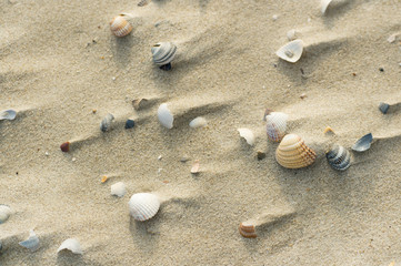 Shells at windy beach
