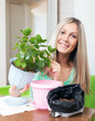 woman transplants potted Kalanchoe flower