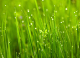 Green grass with waterdrops