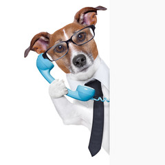 business dog