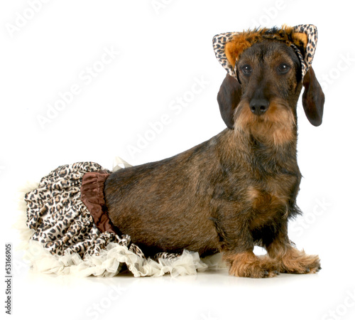 dog wearing cat costume