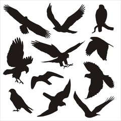 bird of prey silhouettes