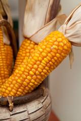zboże kukurydza kolba