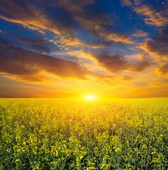 sunset over rape field